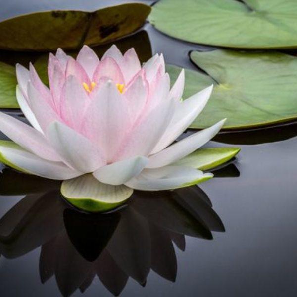 yoga enfant fleur de lotus