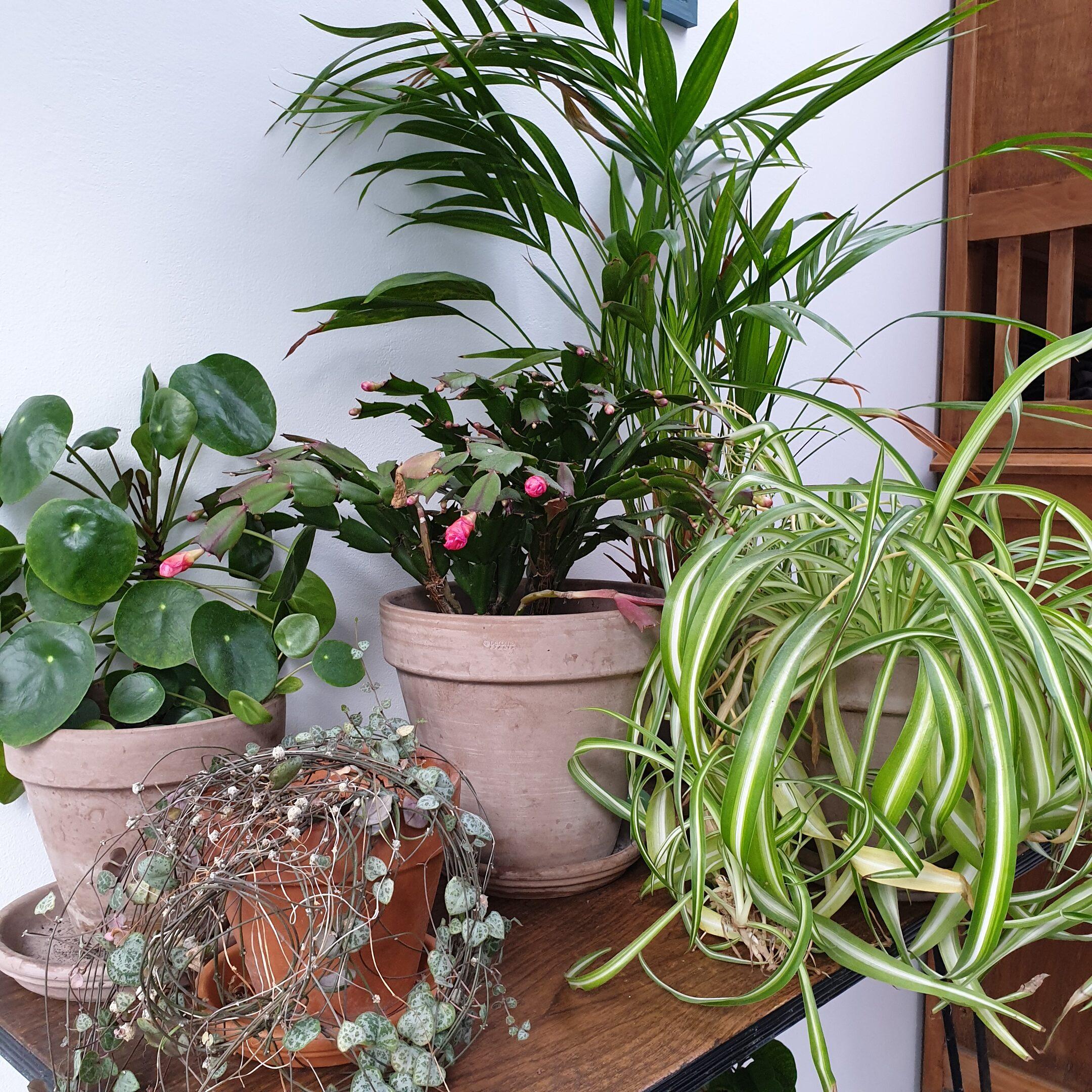 urban jungle plantes d'interieur